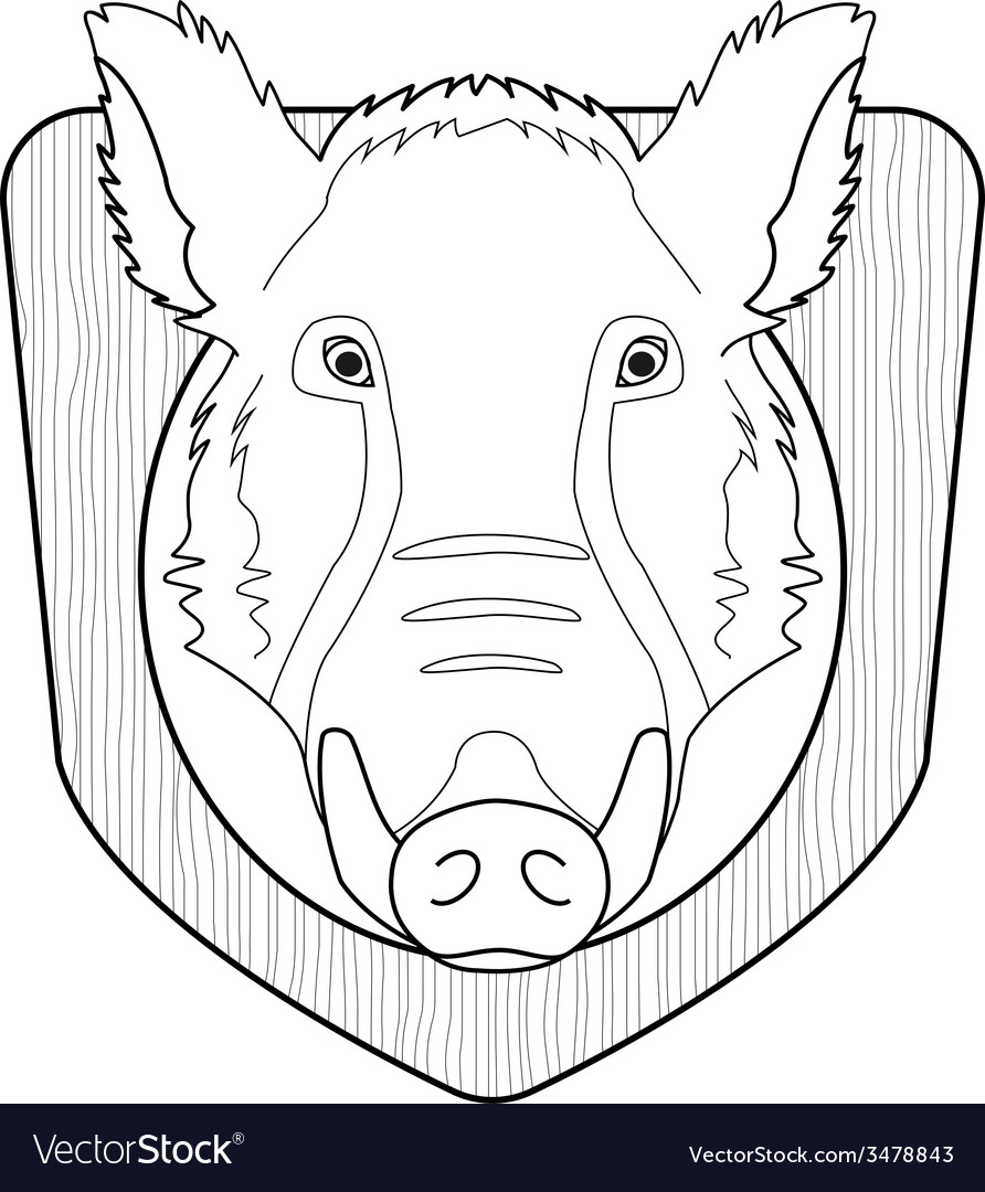 Stuffed taxidermy wild boar head Line-art vector image