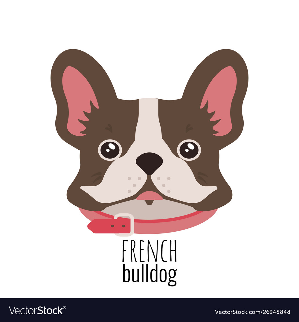 French bulldog face cute brown frenchie with