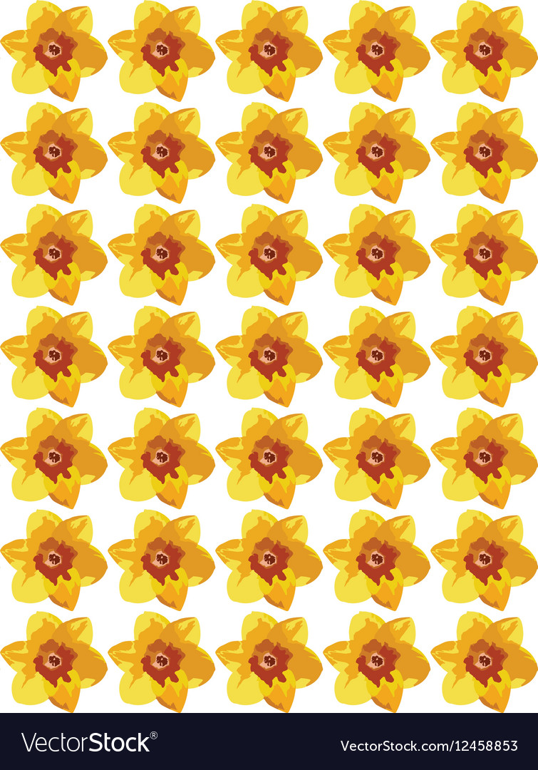 Narcissus flower pattern