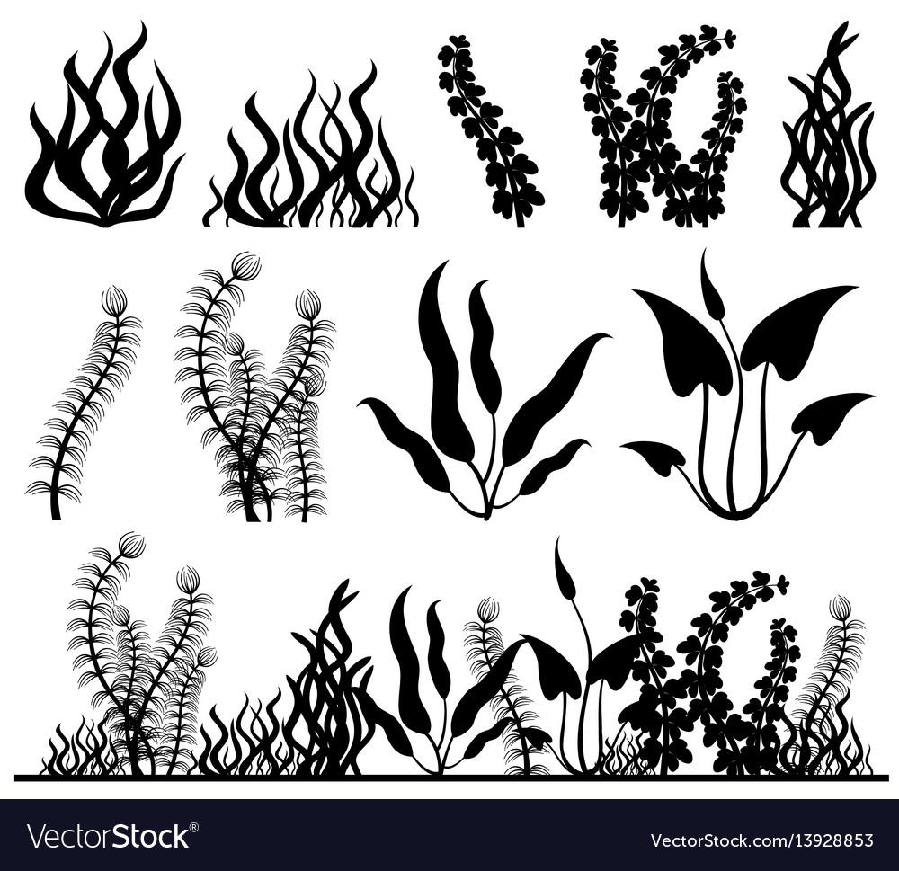 Sea plants and aquarium seaweed set