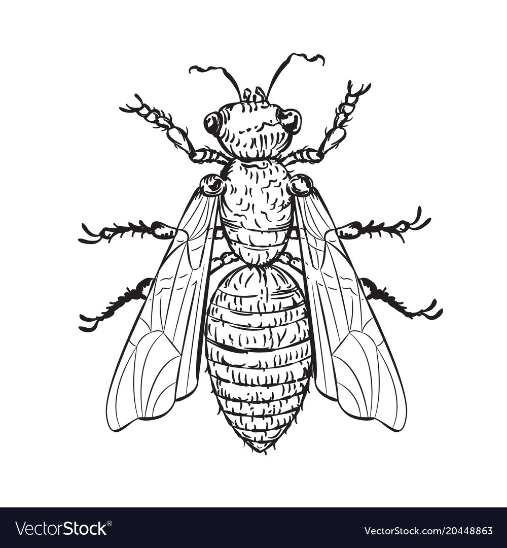 House fly line art