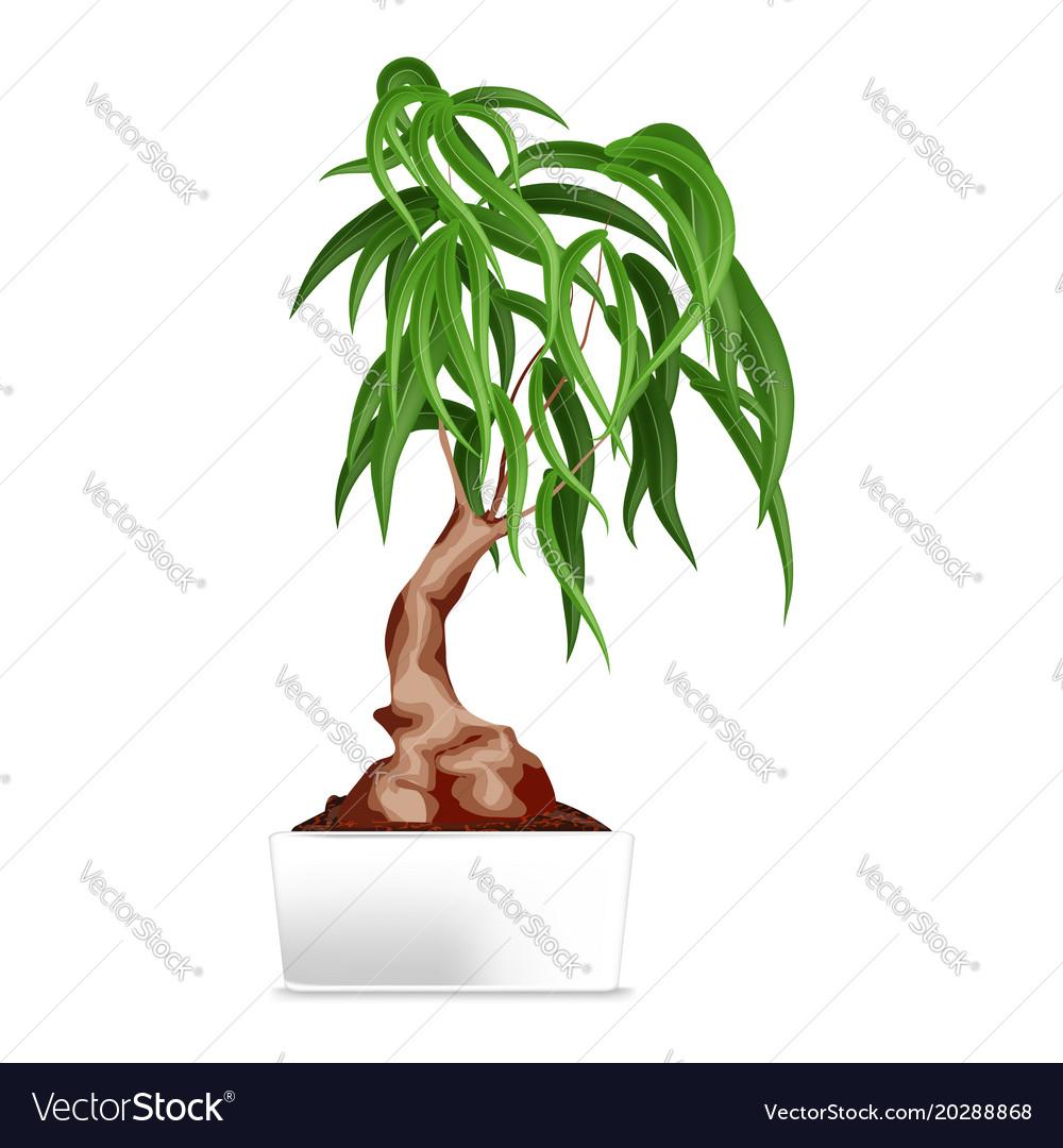 Bonsai in white pot