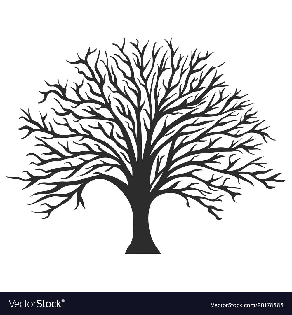 object oak tree silhouette royalty free vector image rh vectorstock com tree silhouette vector svg tree silhouette vector file