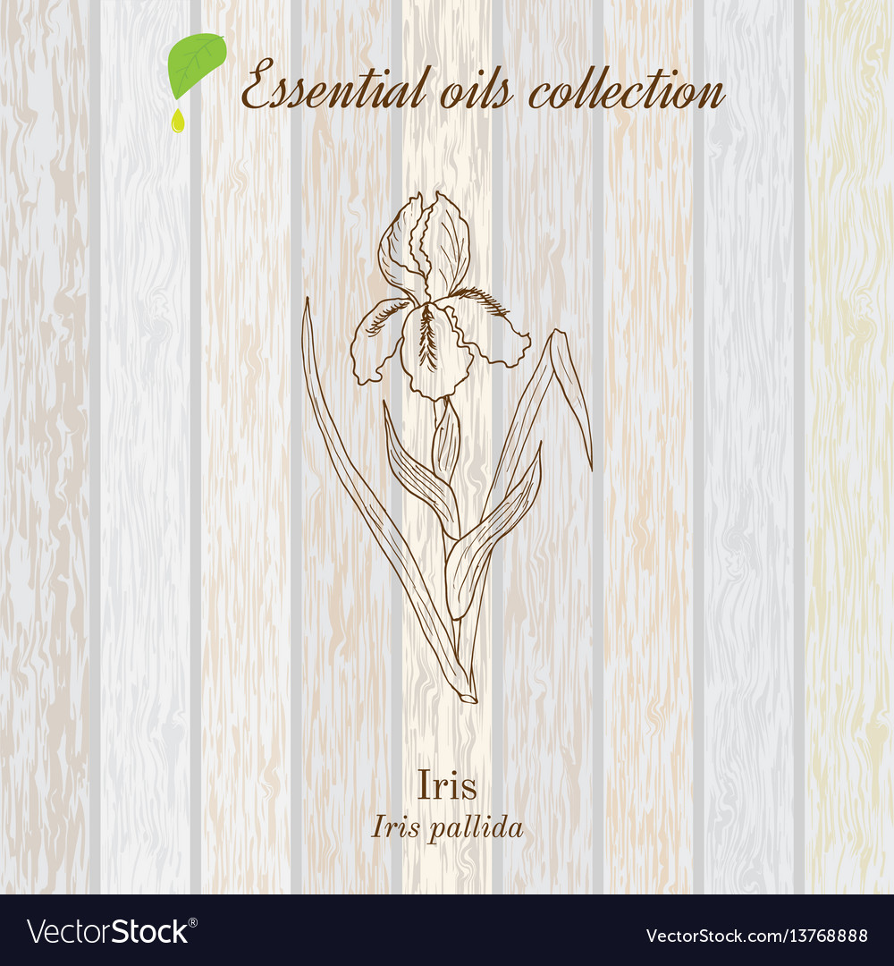 Pure essential oil collection iris wooden