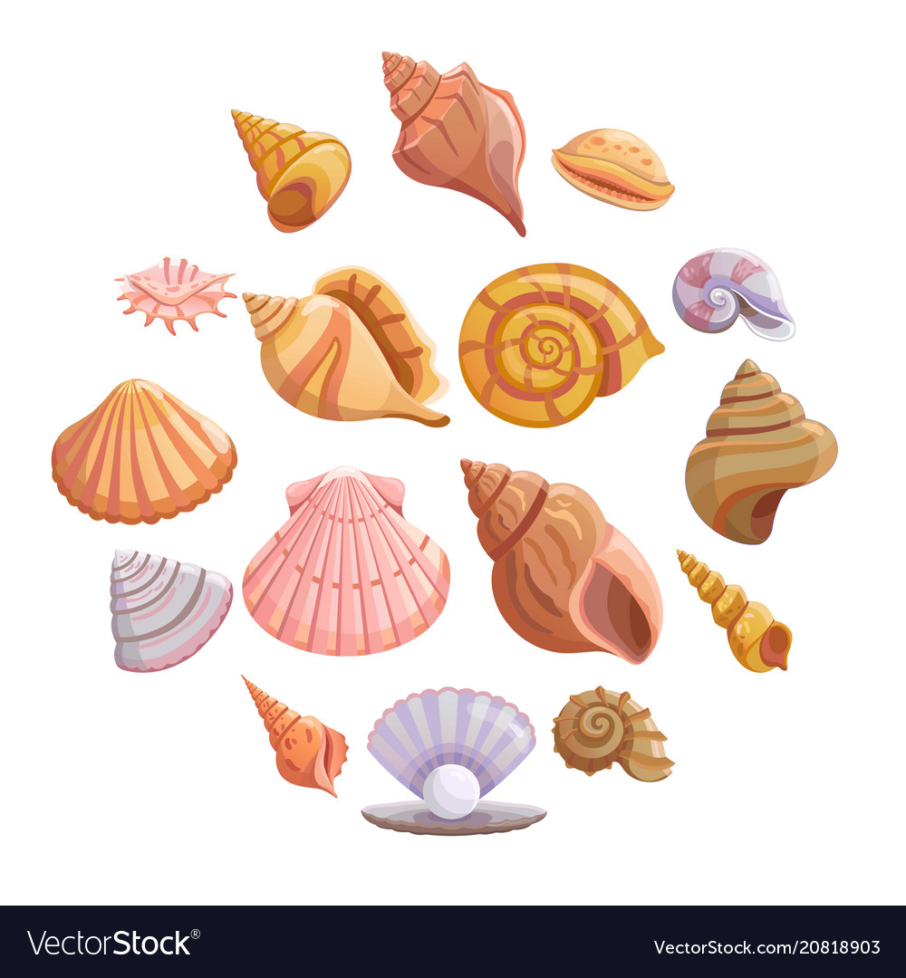 Pictures Of Sea Shells On The Beach