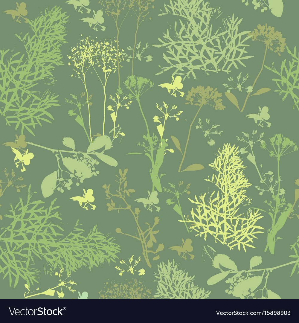 Seamless pattern of silhouette various herb vector image