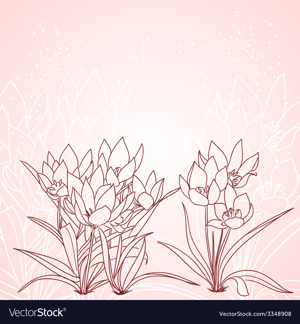 Spring tulips background vector image