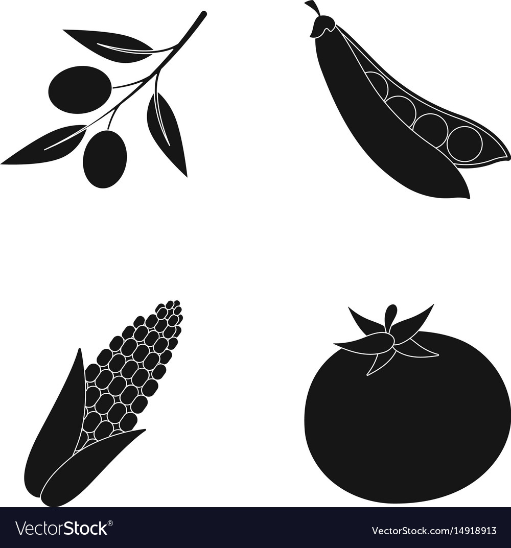 Olives on a branch sweet peas corn cob red vector image