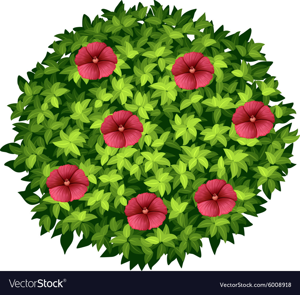 Red Flowers On Round Bush Royalty Free Vector Image