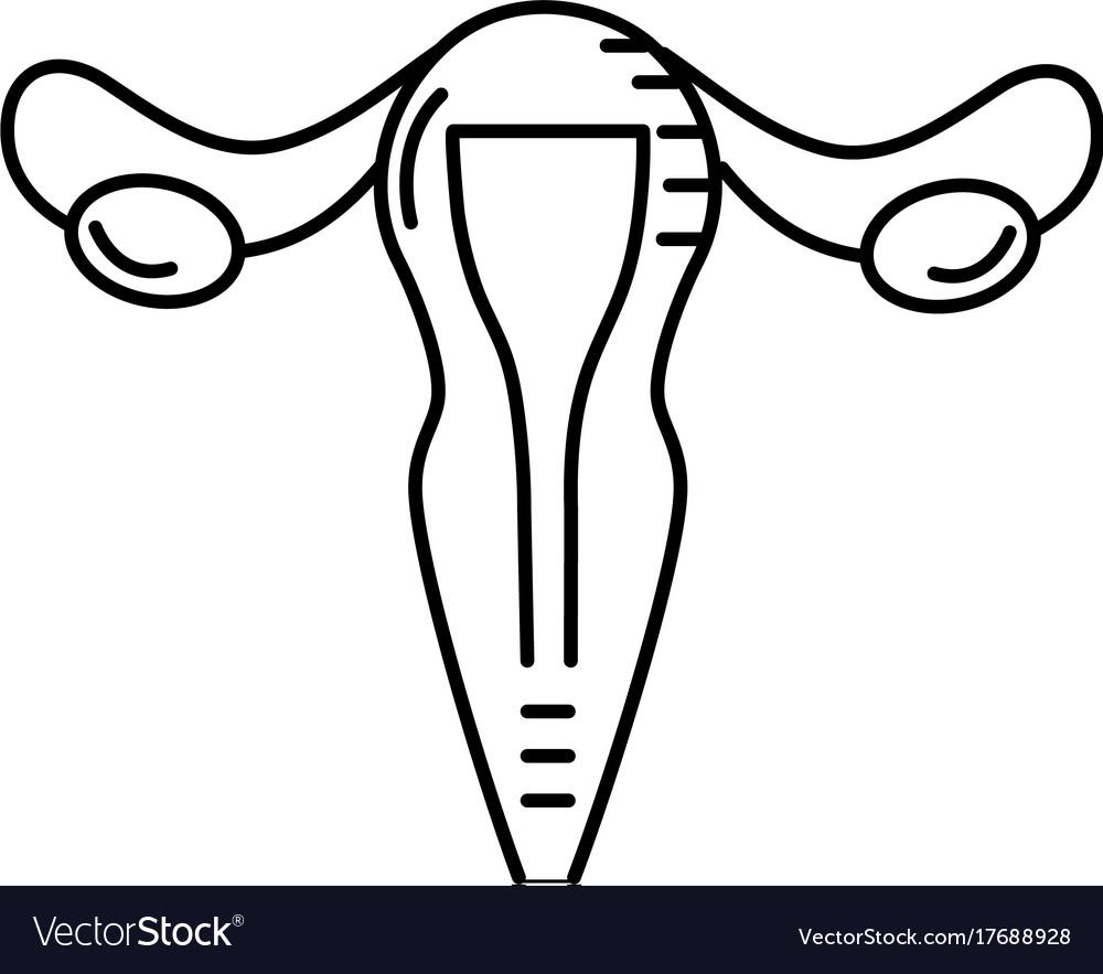 Line uterus fallopian tubes anatomy female Vector Image