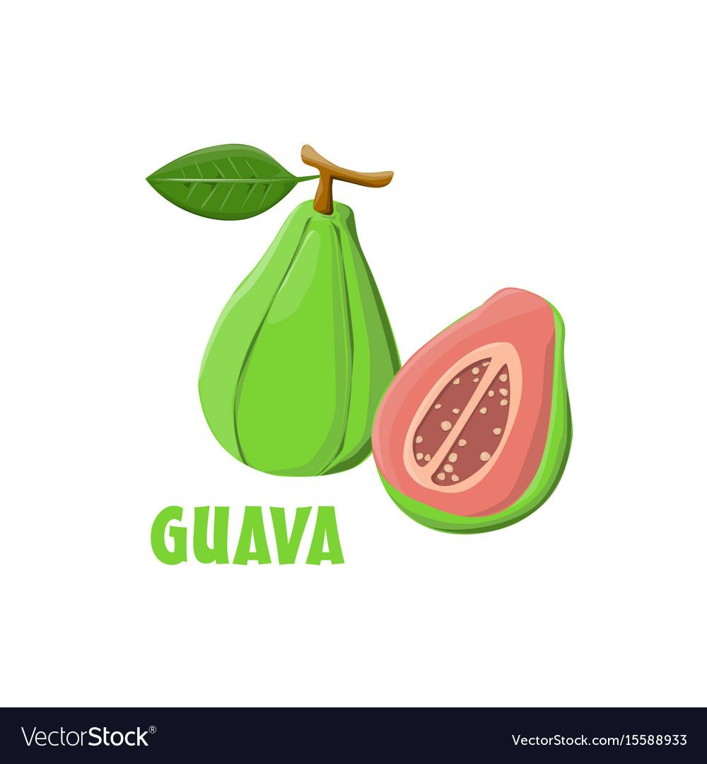 Logo guava farm design vector image