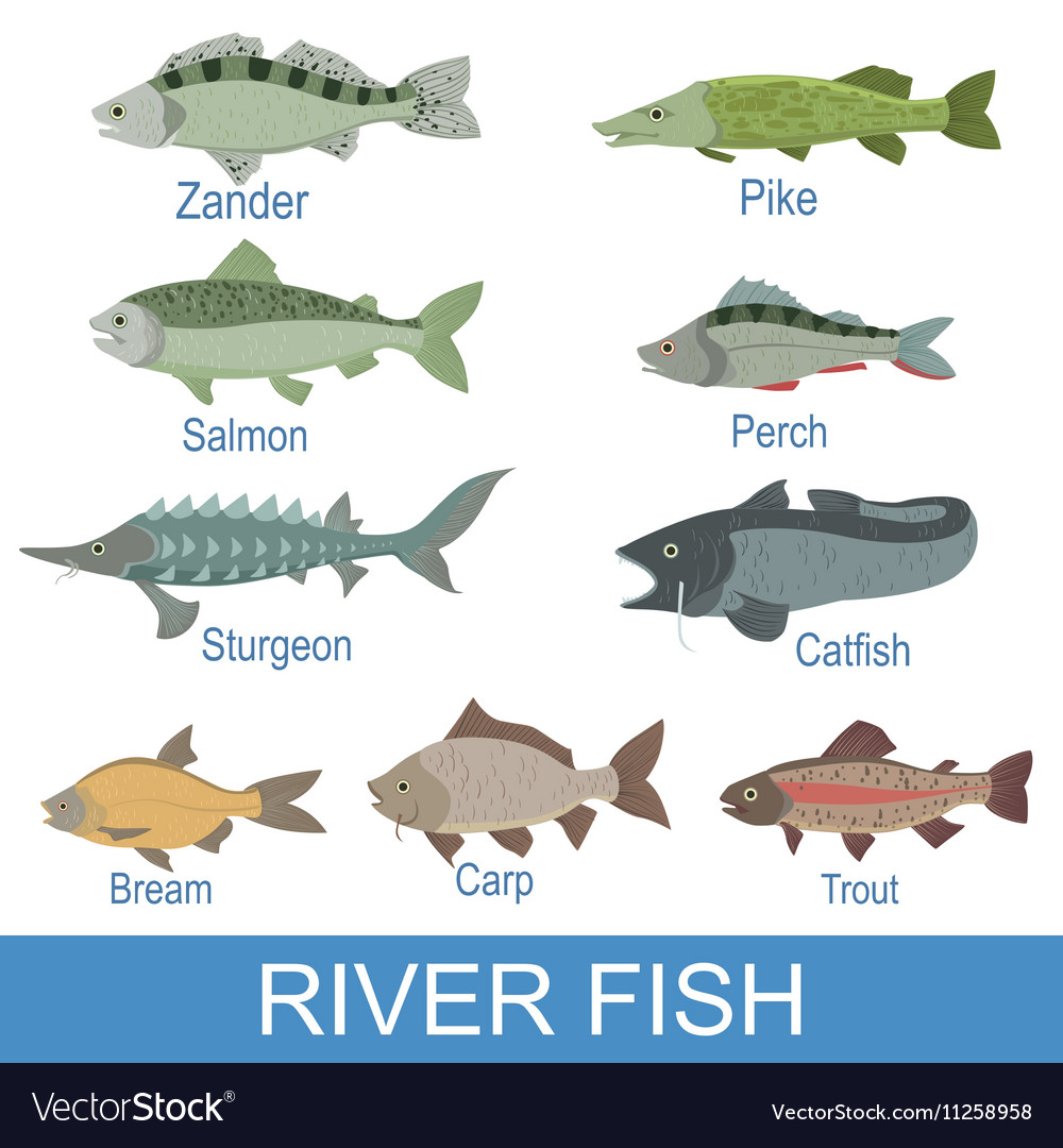 Fishes pictures with names images for Names of fish
