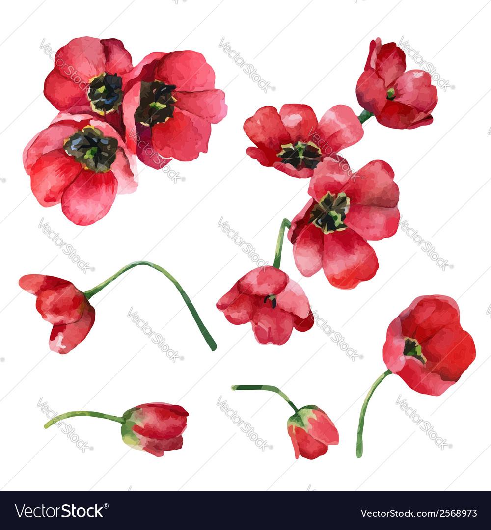 Set of tulips
