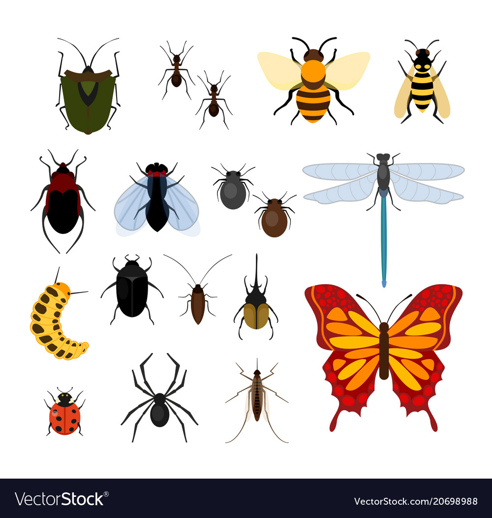 Set of different types of vector image