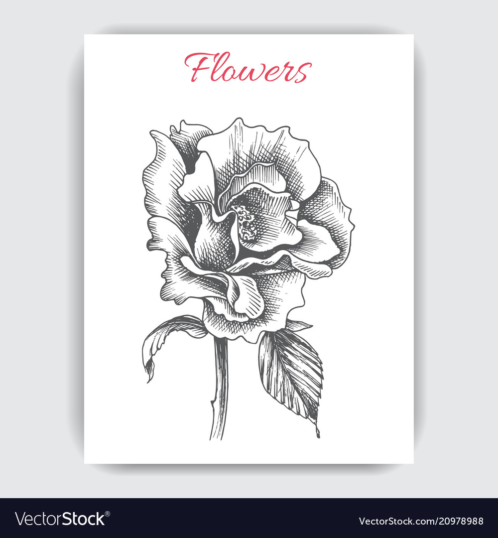Sketch - card with flowers