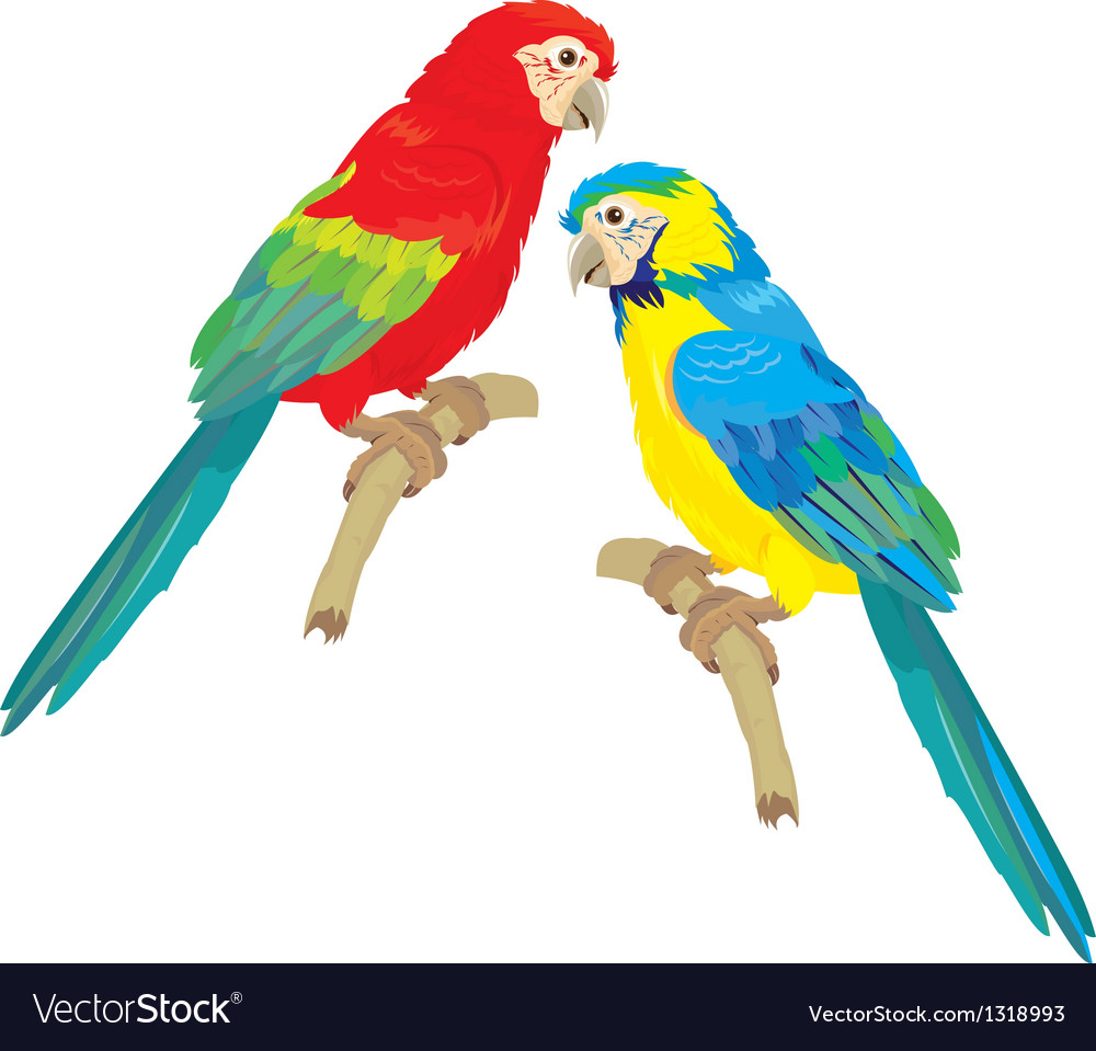 blue yellow and red blue macaw parrots royalty free vector