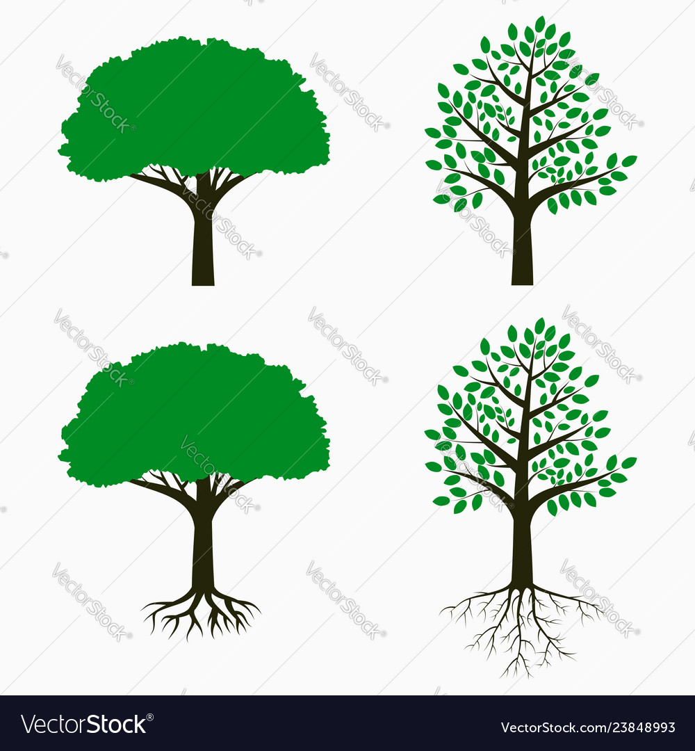 Tree with root and leaf