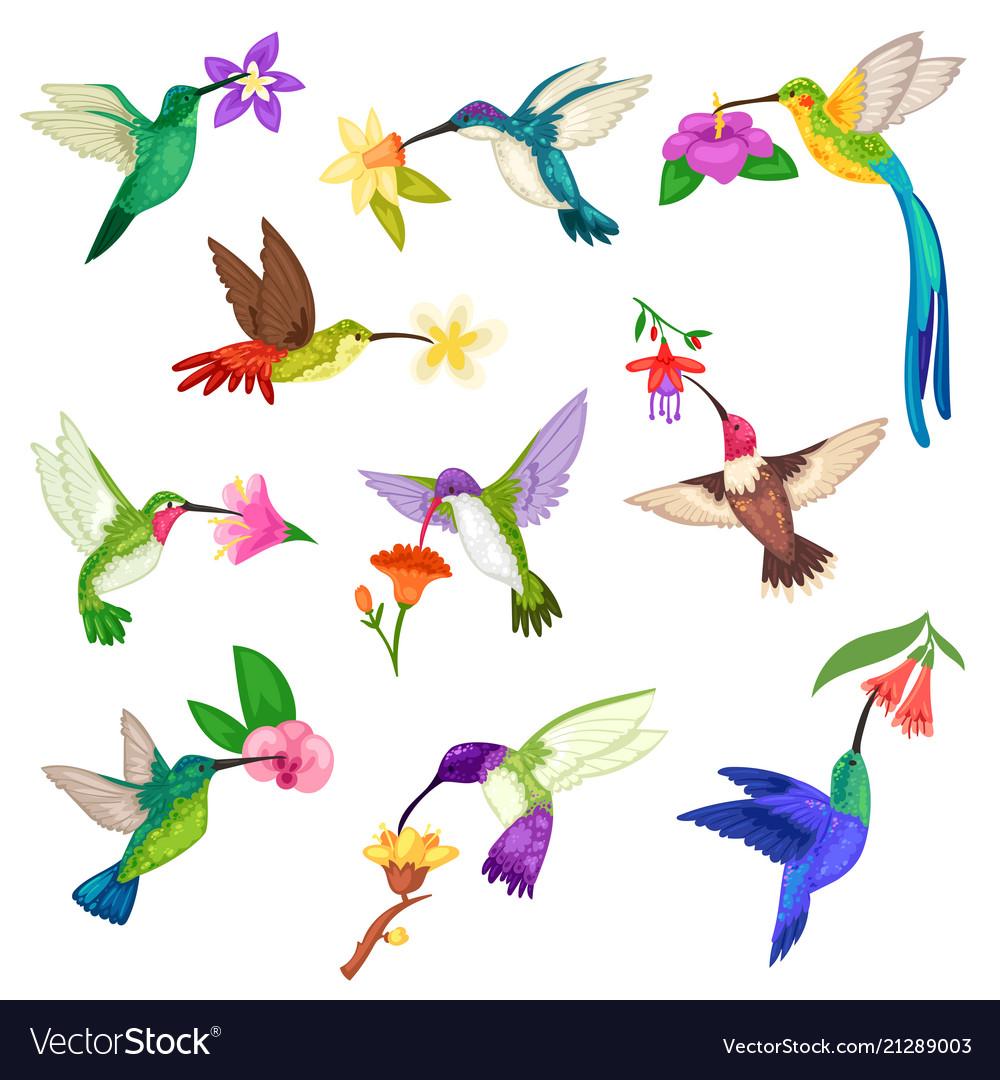 Hummingbird tropical humming bird character