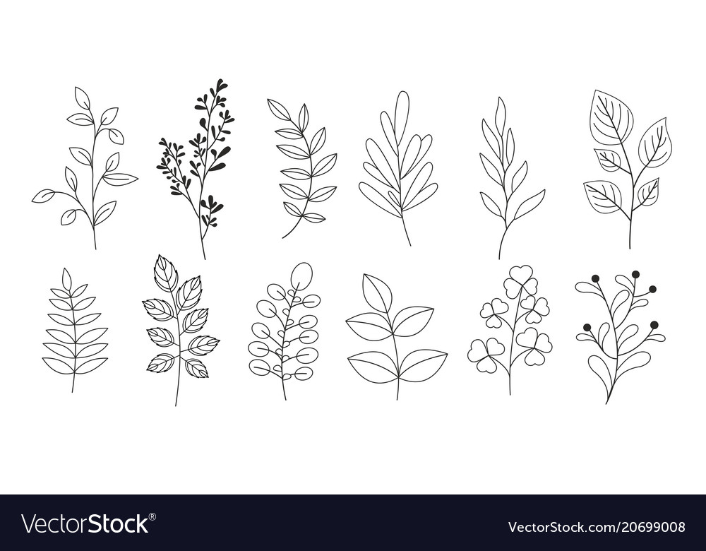 Set of branches leaves twigs vector image