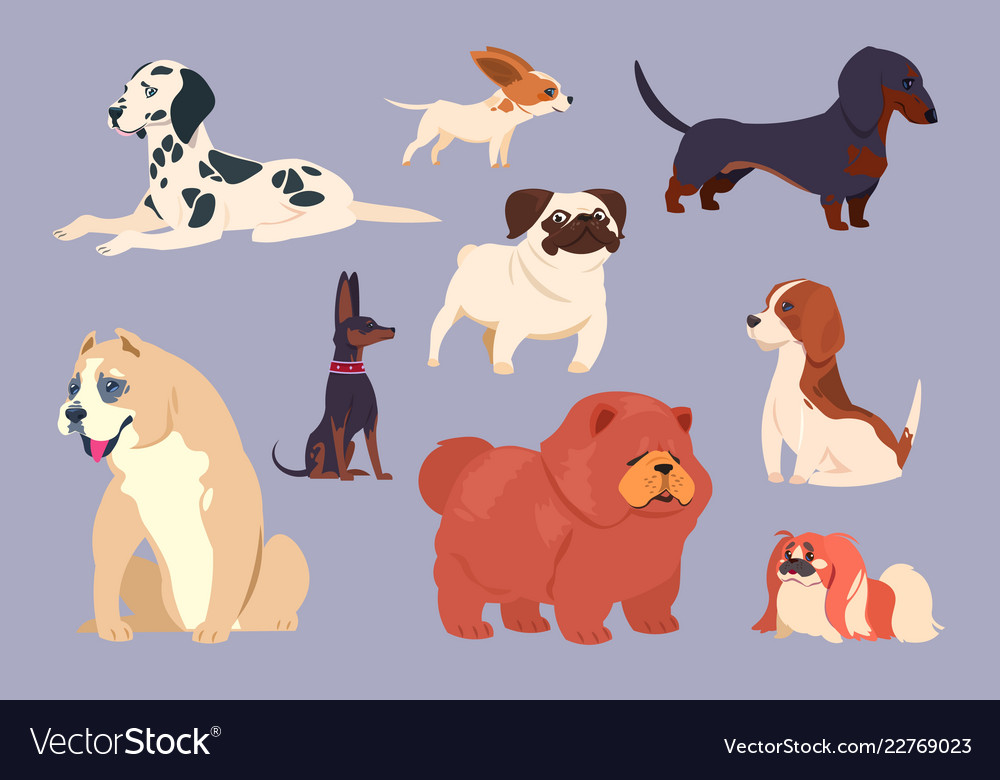 Cartoon dogs puppy pet different breeds chow