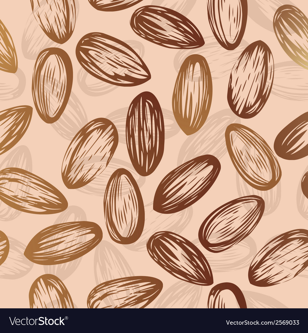 Almonds nut seamless background drawing of nuts vector image