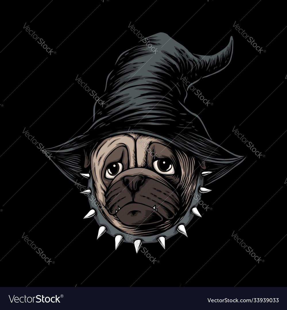 Halloween pug dog wear hat witch