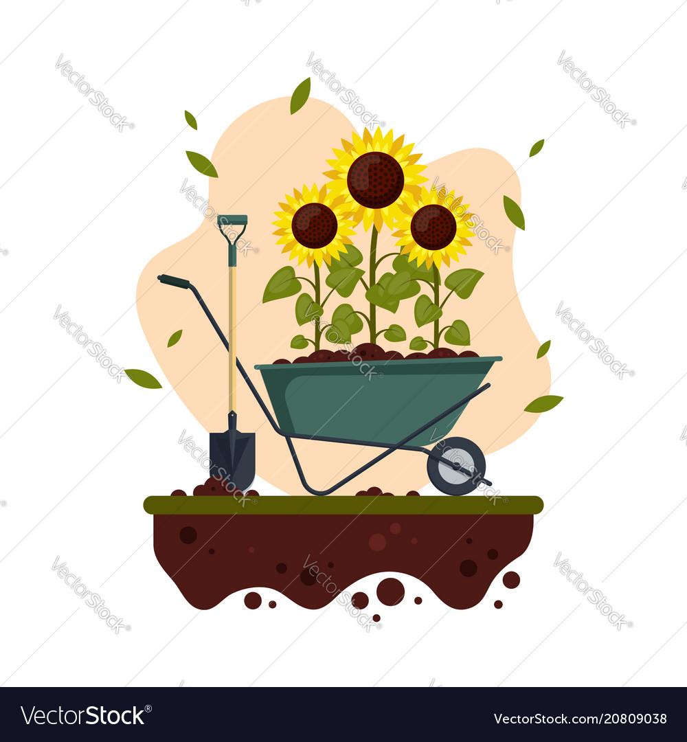 Sunflowers cartoon with wheelbarrow and shovel