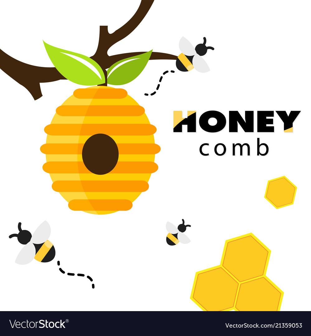 Honeycomb bee hive white background image