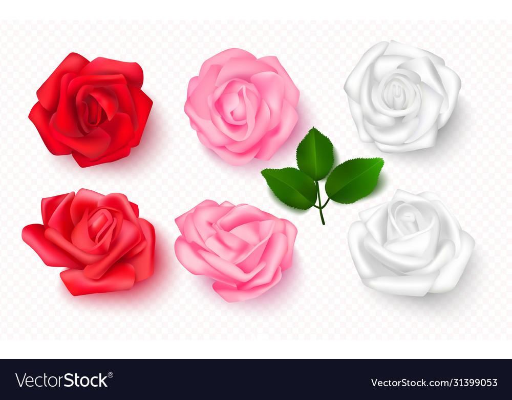 Set rose buds on a transparent background 3d