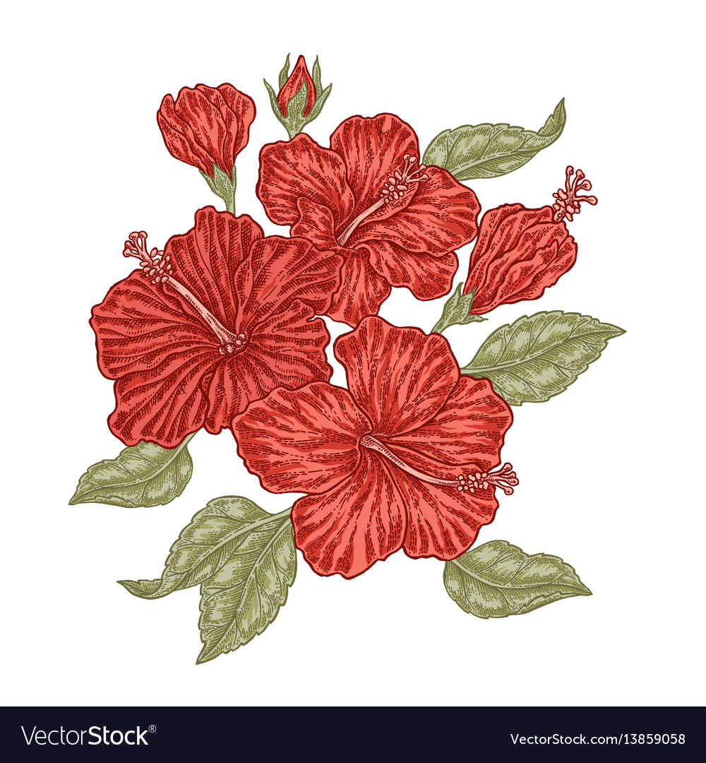 Red hibiscus flowers and leaves in vintage style