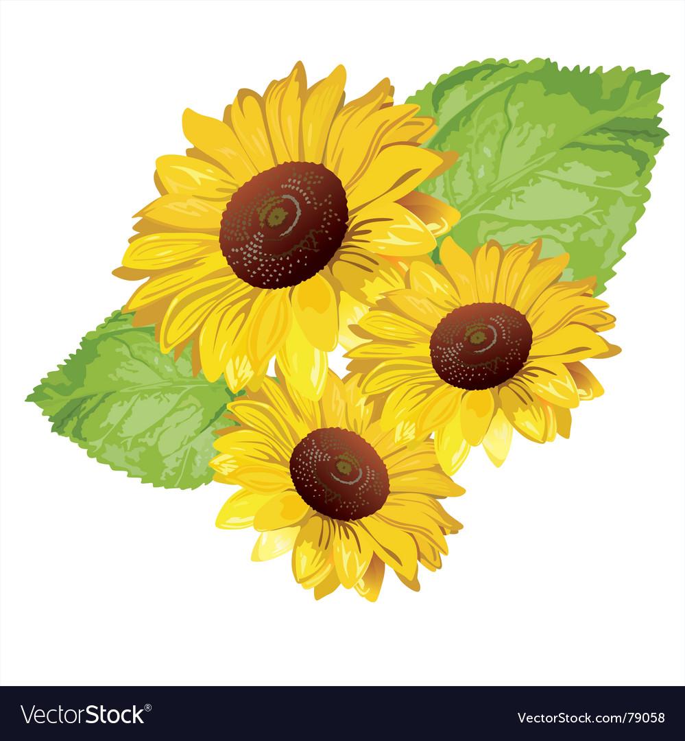 sunflower royalty free vector image vectorstock rh vectorstock com sunflower vector clip art sunflower vector logo