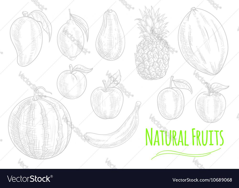 Natural Fresh Fruits Chalk Sketch On Chalkboard