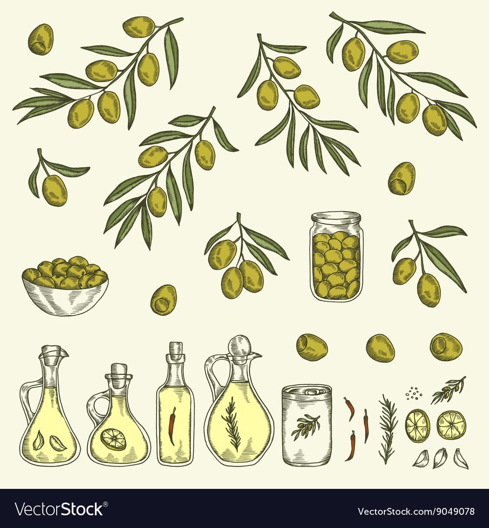 Hand drawn olive graphic set