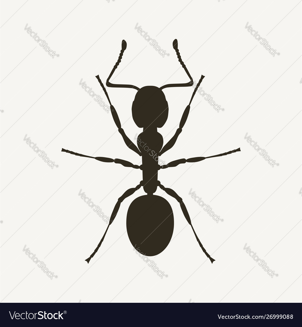 Black ant silhouette viwed from above