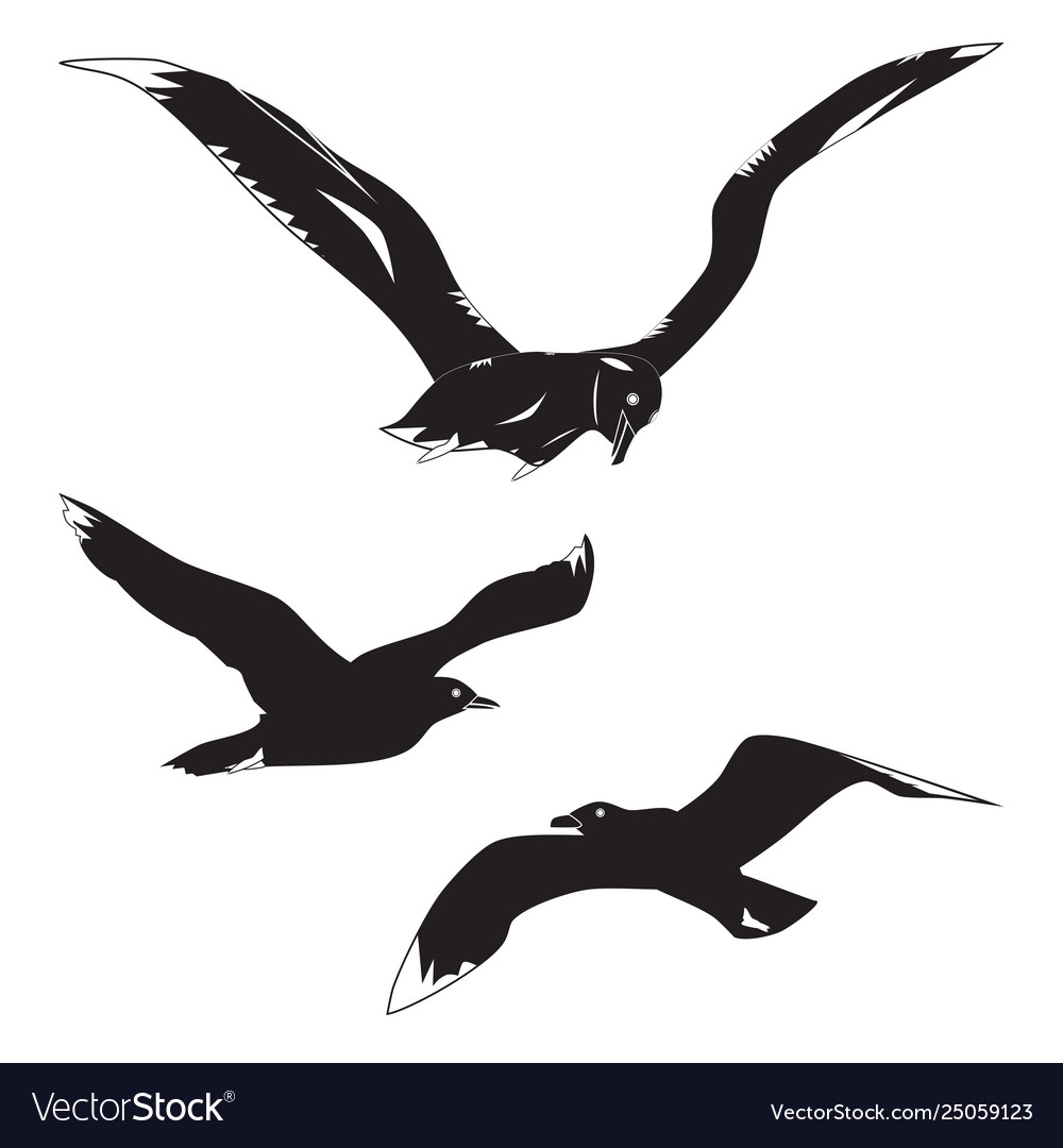 Black silhouettes gulls and albatross