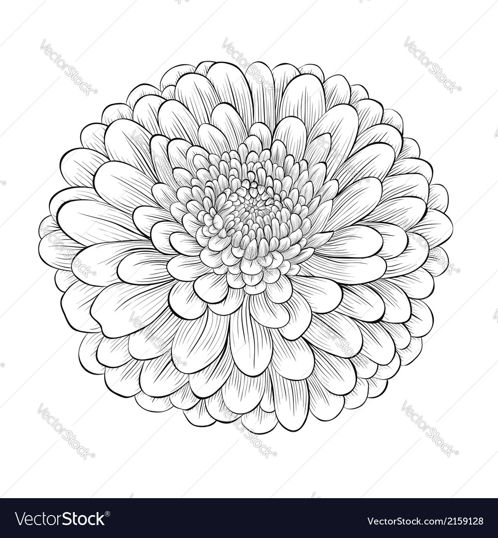 Black and white flower isolated