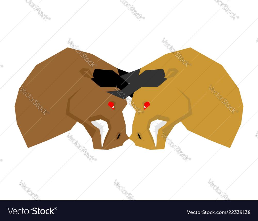 Battle bull bullfight two bulls to butt