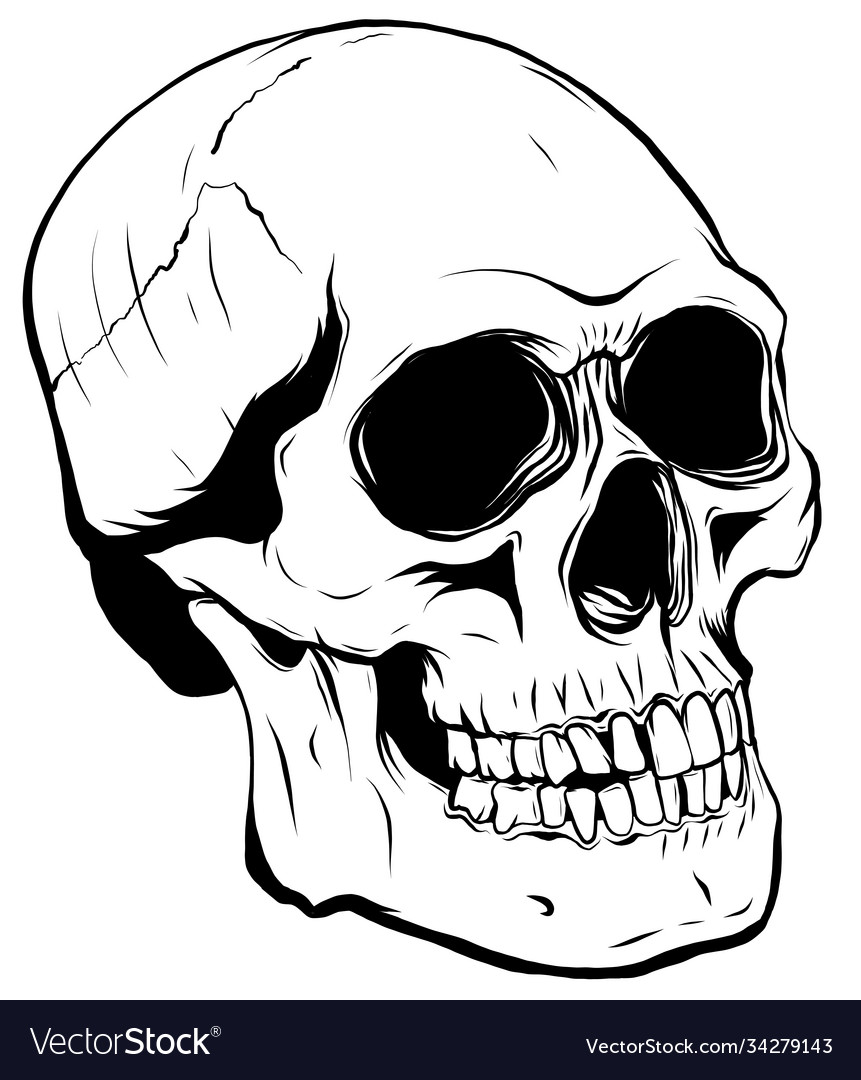 Outline graphics skull in