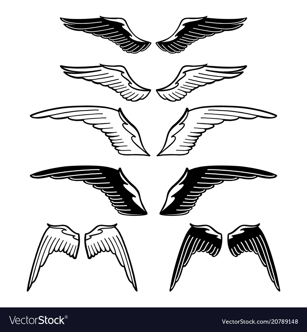 Graphic collection of wings