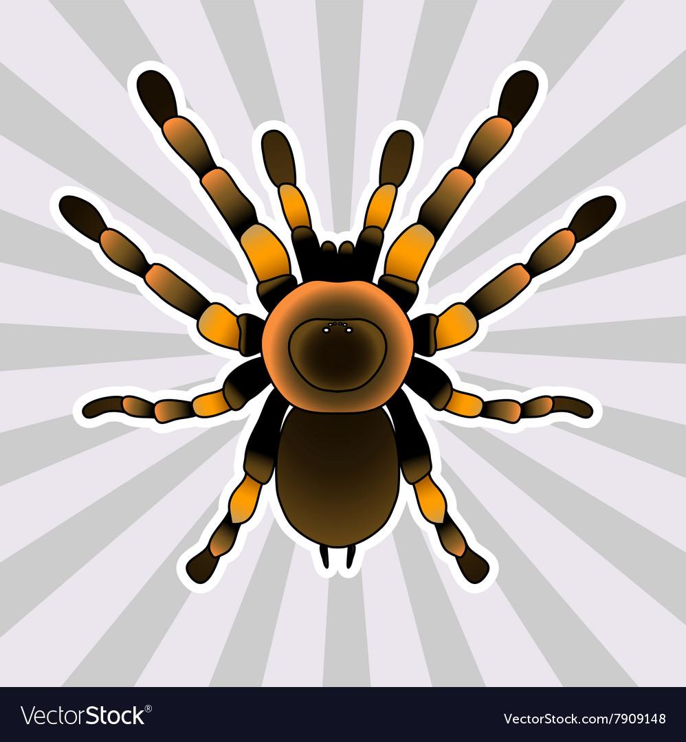 Insect anatomy Tarantula spider Brachypelma Vector Image