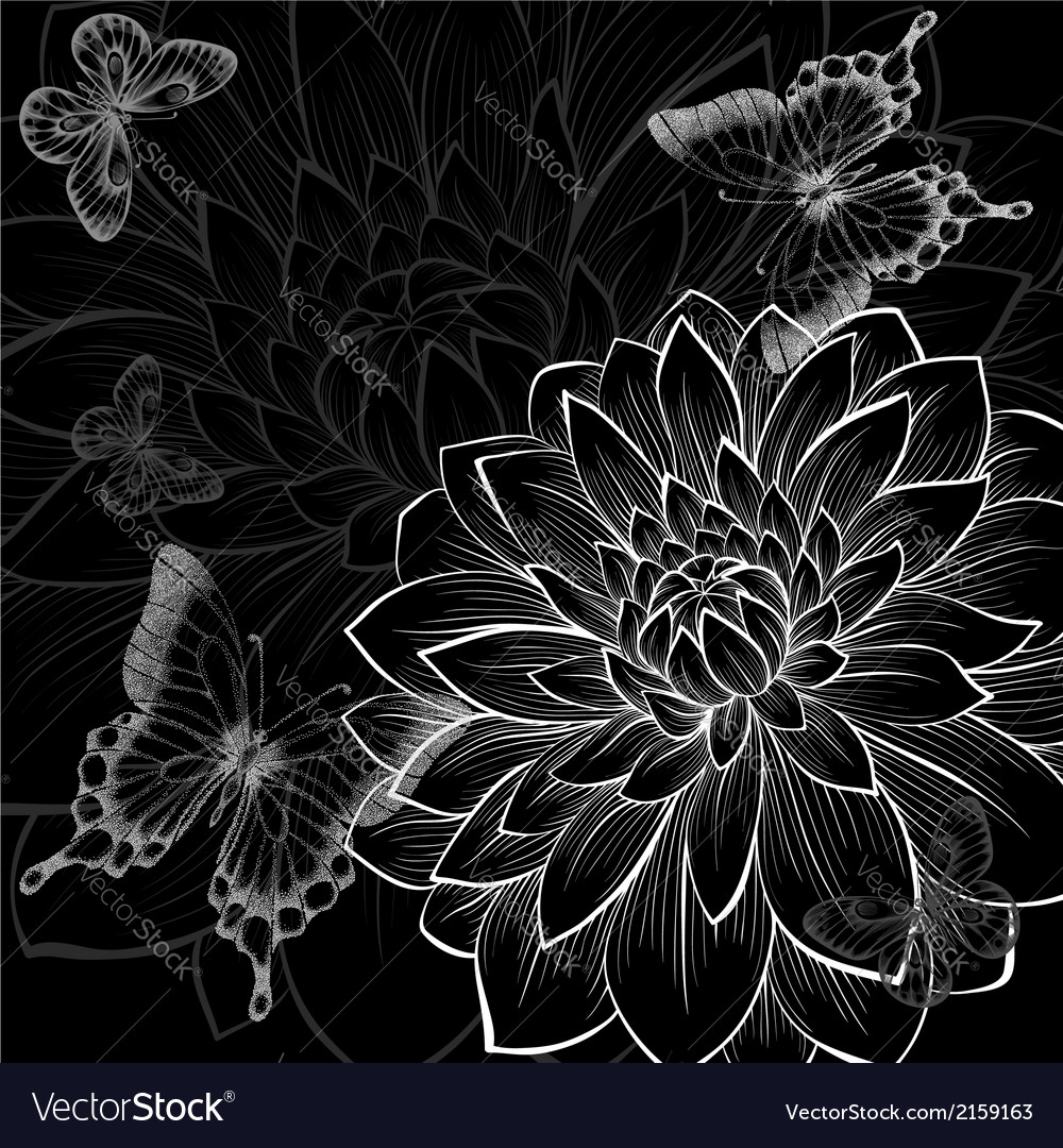 Black and white background dahlia and butterflies