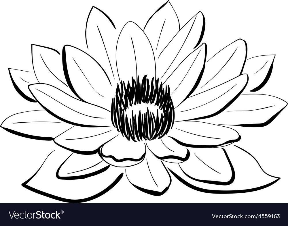 Black and white lotus flower royalty free vector image black and white lotus flower vector image mightylinksfo