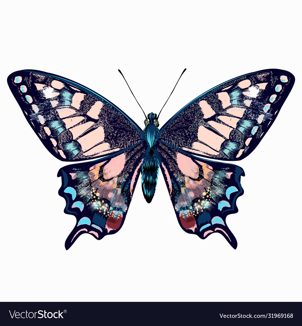 Beautiful hand drawn pink blue butterfly
