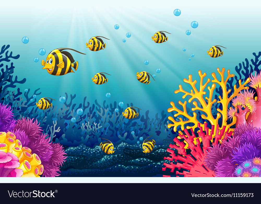 Lots of fish under the sea