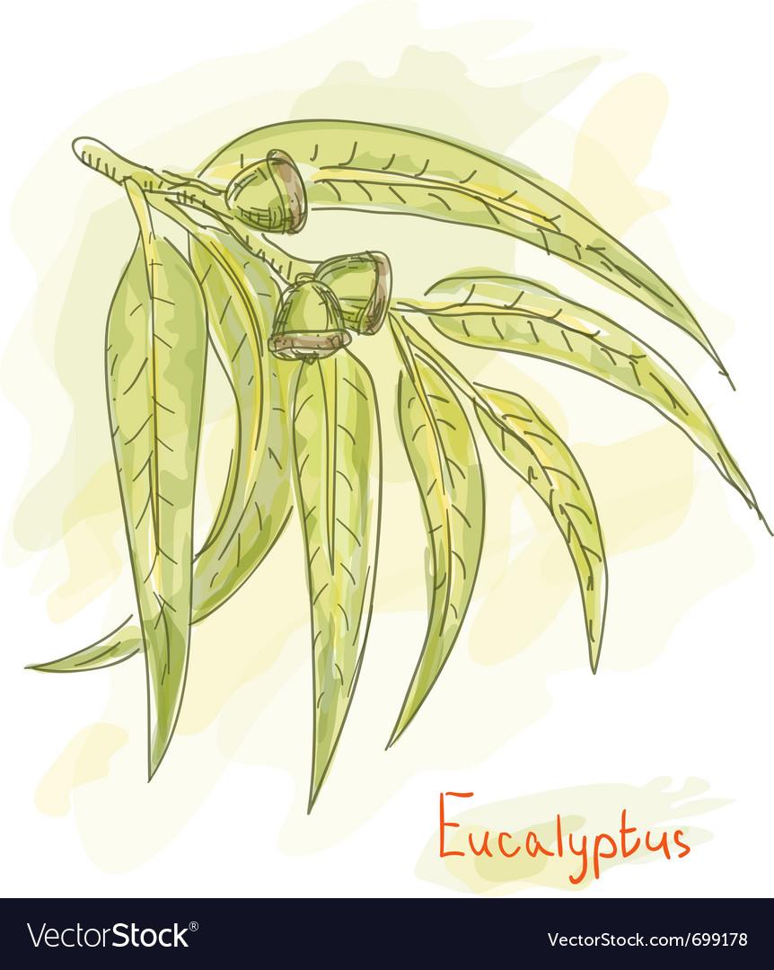 Eucalyptus branch watercolor