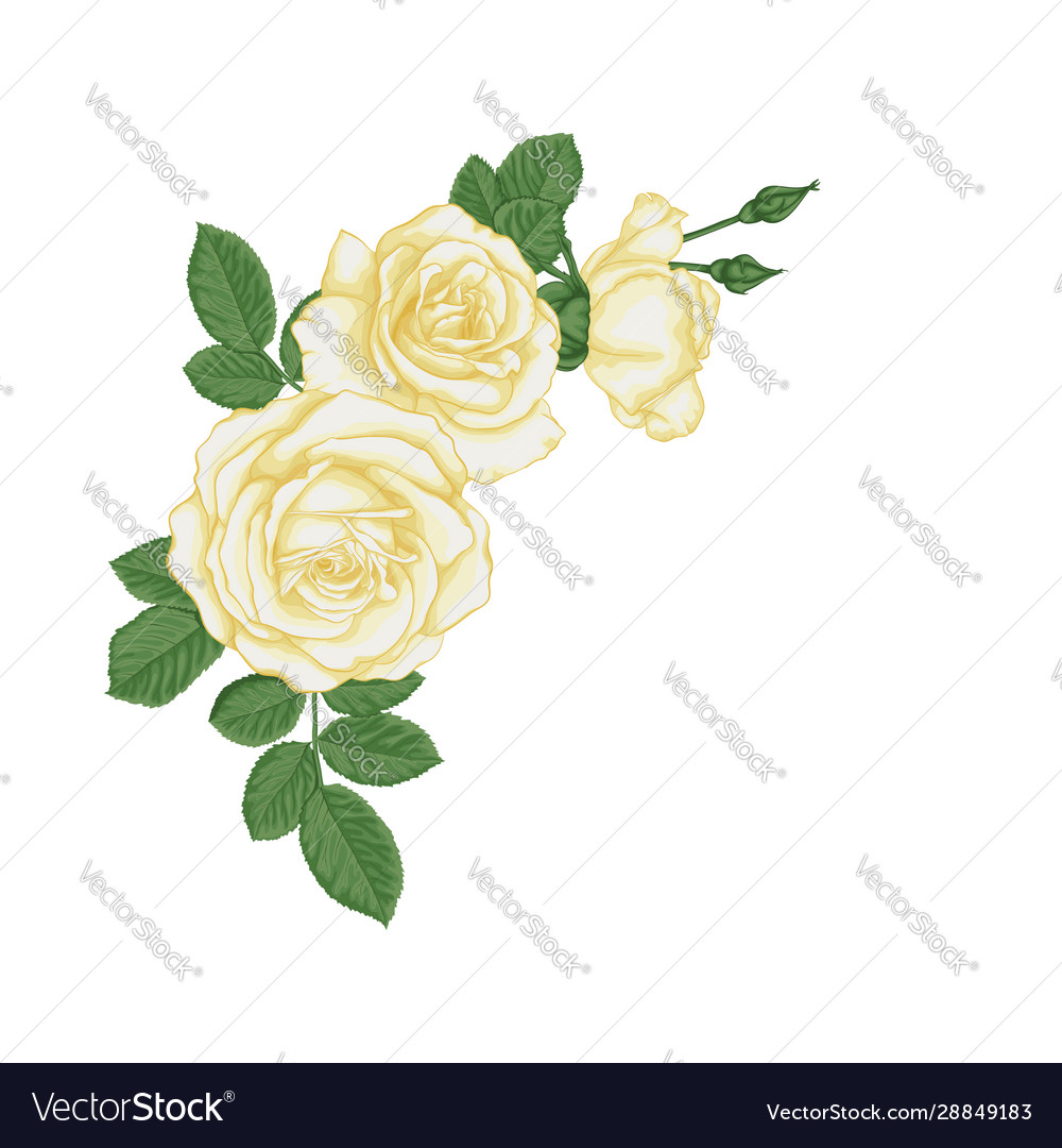 Beautiful bouquet with white roses and leaves