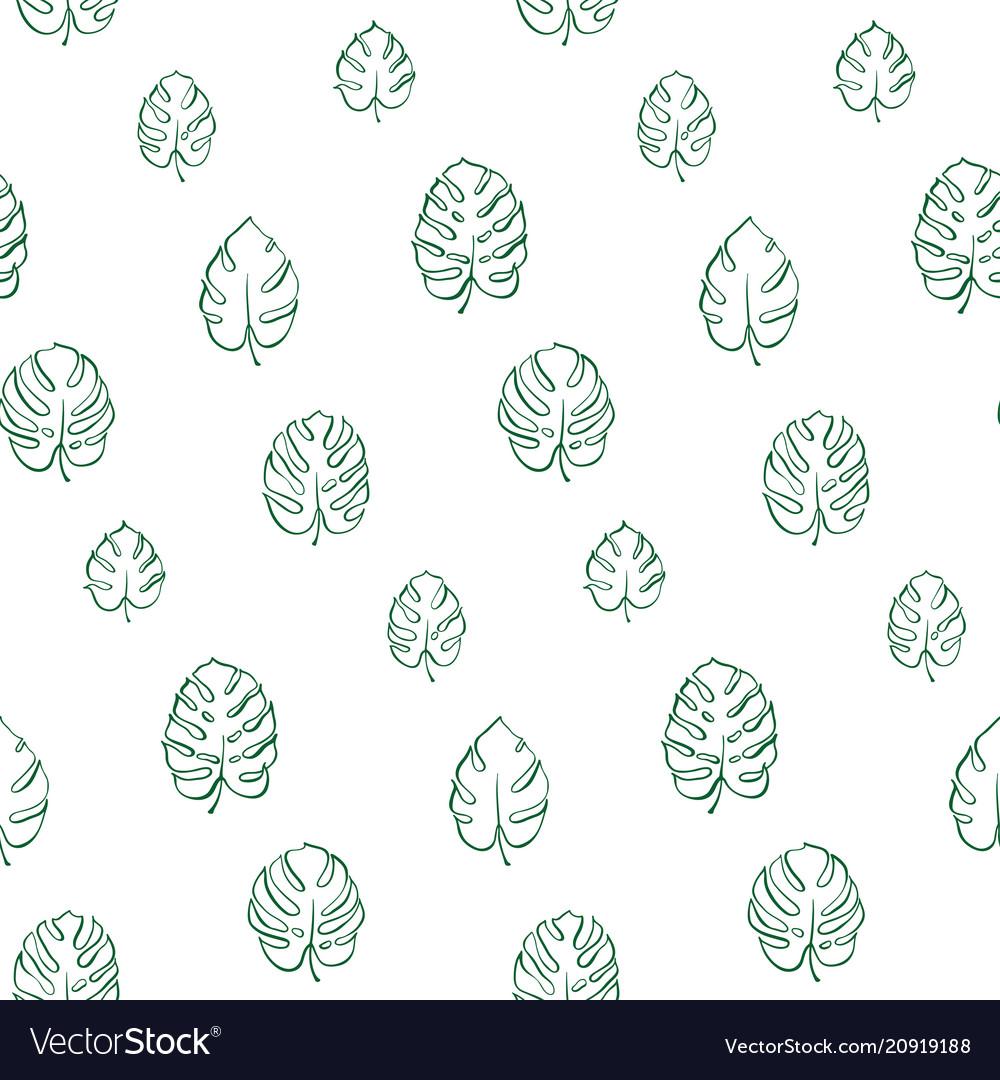 Botanical of monstera leaf