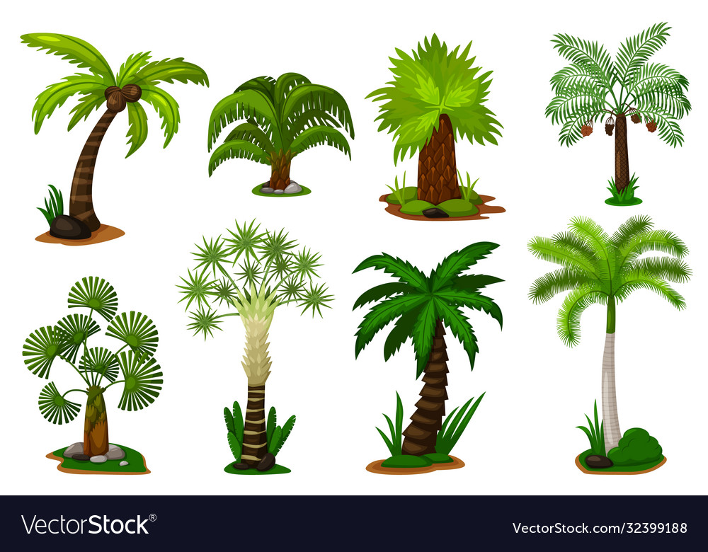 Palm trees set isolated coconut palm tree plant
