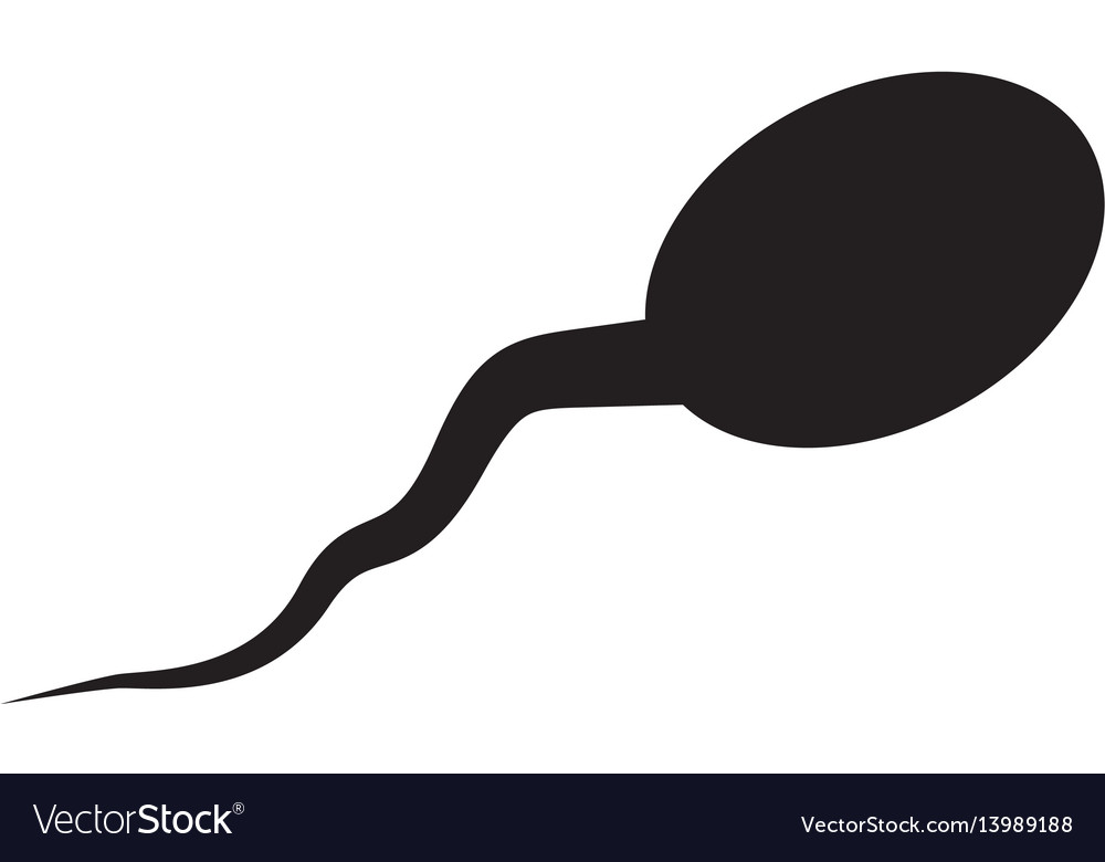 Sperm icon sperm on white background vector image