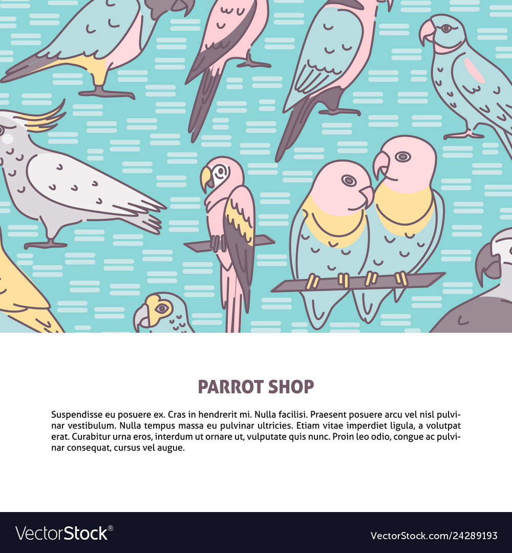 Parrots colored background in line style